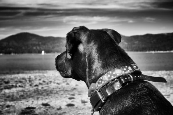 PonderingPuppy